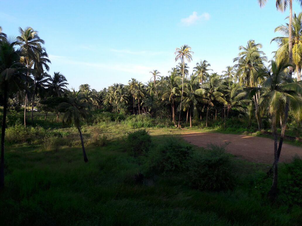 Plot for Sale in North Goa.
