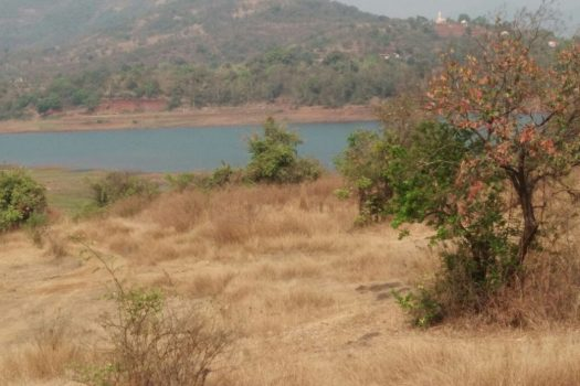 agriculture land for sale in pune bhor